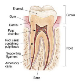 RootCanalTreatment